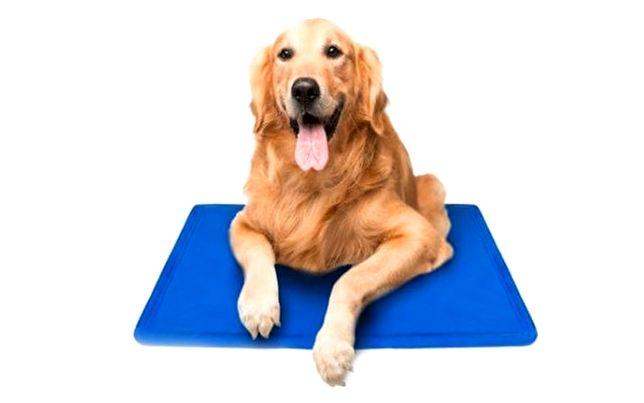 Żelowa Mata Chłodząca dla psa 104 x 52cm Duża XL Idealna na Upały