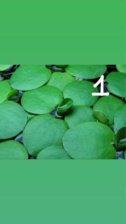 Plantas para o aquario