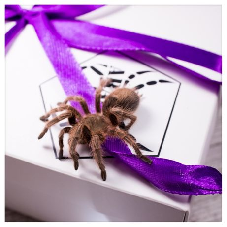подарок-набор паук птицеед павук корм террариум бокс субстрат пинцет