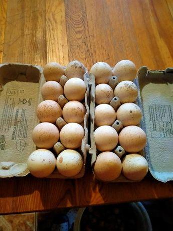 Sprzedam jaja indycze