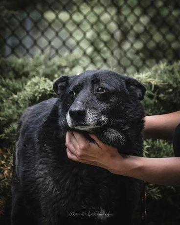 Irysek to ideał psa, mimo to nikt go nie chce...Adoptuj!
