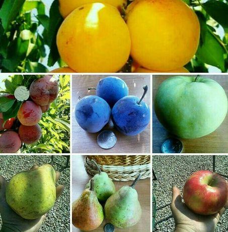 Саженцы плодовые Яблони,абрикосы,сливы,черешня,груши,вишни