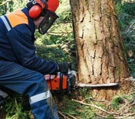 Спил и омоложение деревьев