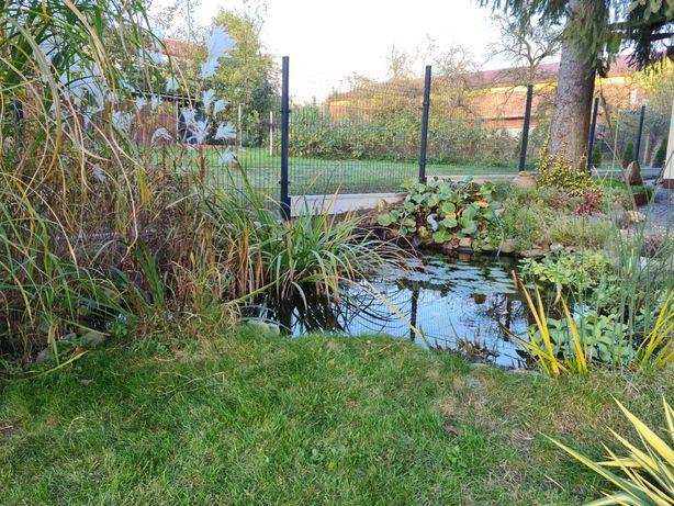 Panel ogrodzeniowy 123 cm wys. fi 4 mm . szerokość 250 cm  70 16