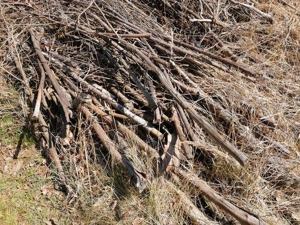 Drzewa z wycinki grube i cieńkie za darmo