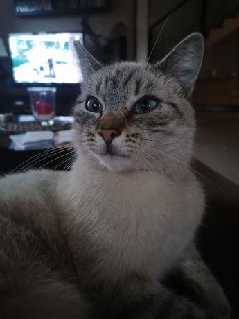 Zaginął kot, Jastków/Panieńszczyzna