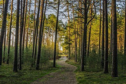Ogród działkowy - Działka w lesie 250-300m2 Kompleks ogrodow leśnych