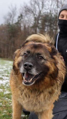 Pokochaj 8-letniego Grota, który wyglądem przypomina niedźwiadka!!