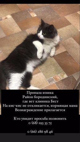 Пропала кошка БОРОДИНСКИЙ
