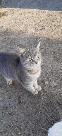 Пропала кошка полосатая дымчатая!