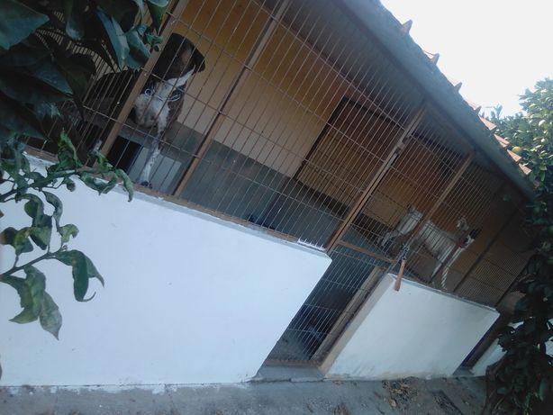 Canil para cães arrenda se /aluguer mensal
