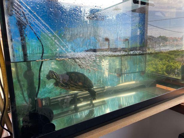 Aquário para tartarugas