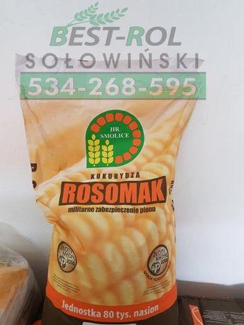 ROSOMAK Kukurydza 250 FAO 80 tyś. Nasiona Kukurydzy CENA BRUTTO