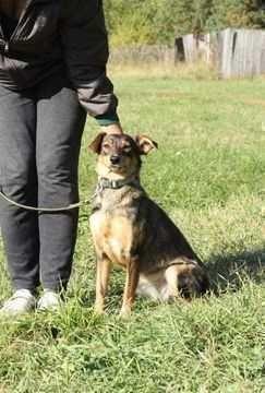 Дружелюбная и сообразительная Марта, собака среднего размера