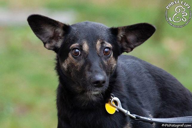 Popatrz na te smutne oczy i daj jej miłość adoptując