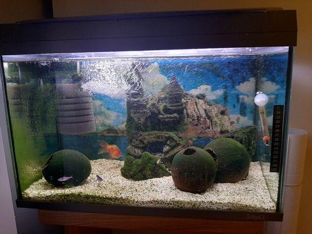 Akwarium 60 litrów z pełnym wyposażeniem i rybkami
