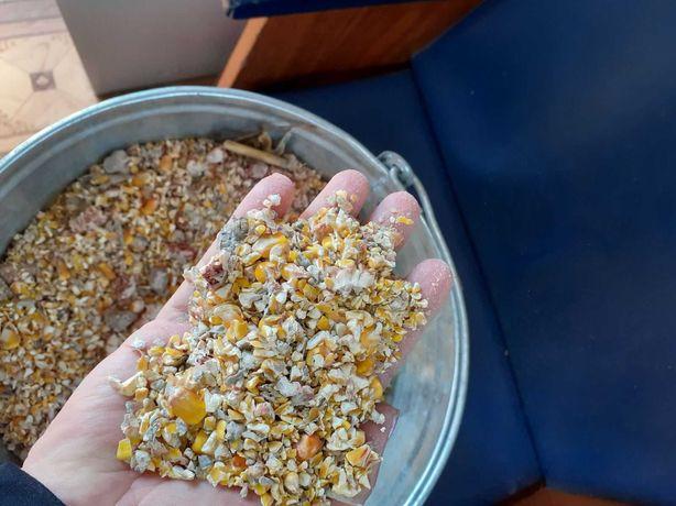 Зерноотходы кукурузы 2021