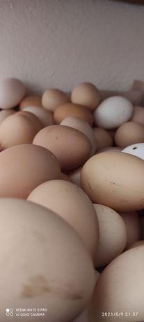 Ovos   casaeiros