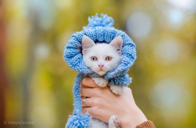Котенок девочка Пюрешка в самые добрые руки!