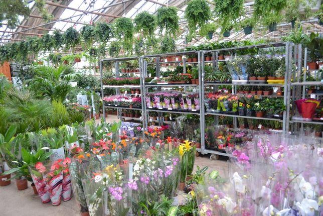 Опт орхидей, комнатных и уличных растений