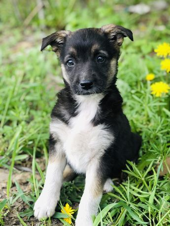 Глория ищет дом щенок