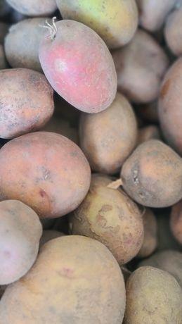 Продам мелкую картошку ( не горох) крупнее по 3 грн...