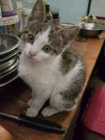 Отдам котят крысоловов 1.5 месяца