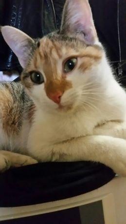 Сонечка Котёнок кошка кошечка девочка до 1 года