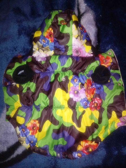 Курточка для чихуахуа или тоя Житомир - изображение 1