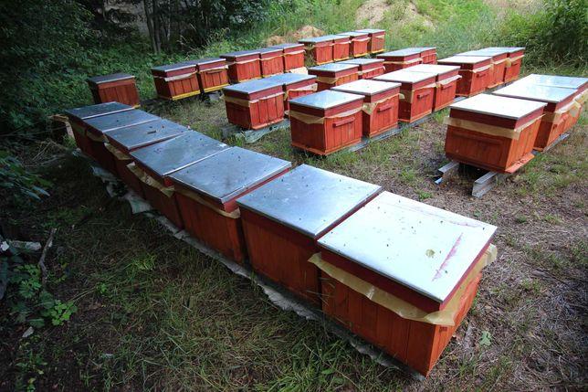 l ule wielkopolski miód pasieka rodziny odklady pszczoły