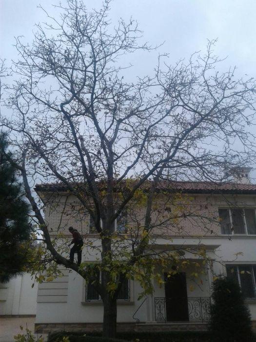 Безаварийно спилим,обрежем деревья.Быстро,аккуратно,вывоз веток. Одесса - изображение 1