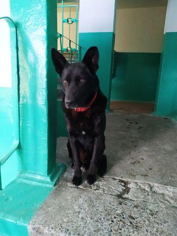 Найдена собака Оболонь
