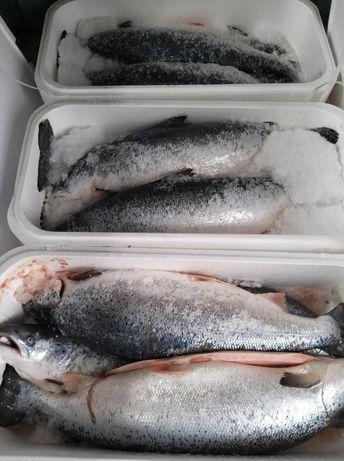 Красная рыба/Лосось/Форель охлаждённая