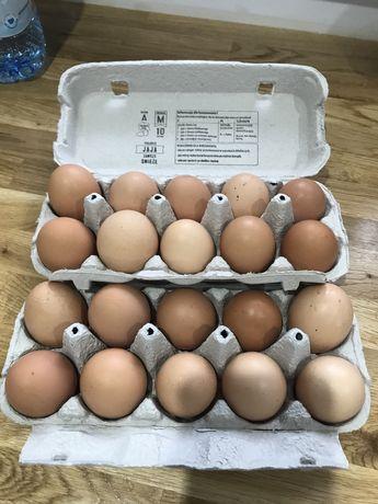 Jajka swojskie