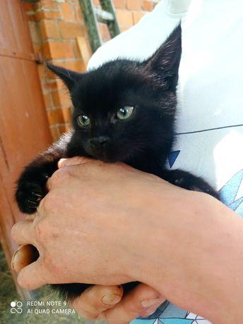 Oddam Śliczne Kotki!