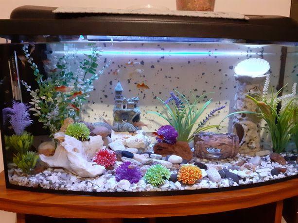 Akwarium z osprzętem i rybkami