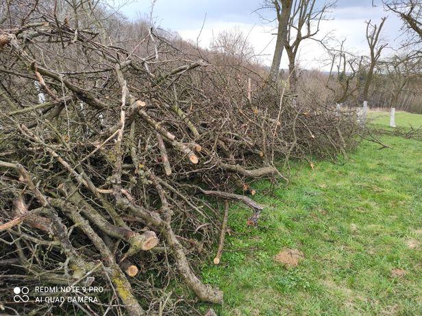 Gałęzie po obcince sadu
