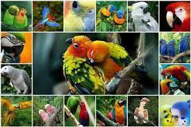 Продам середніх та крупних папуг