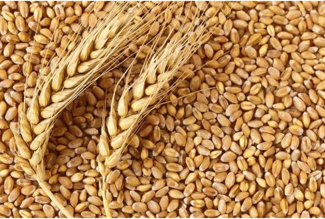 Продам пшеницу 150 кг