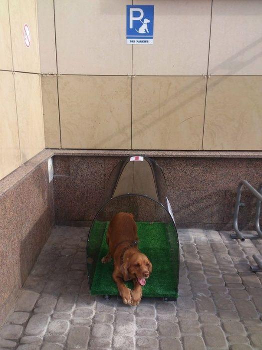 Парковка для собак! Луцк - изображение 1