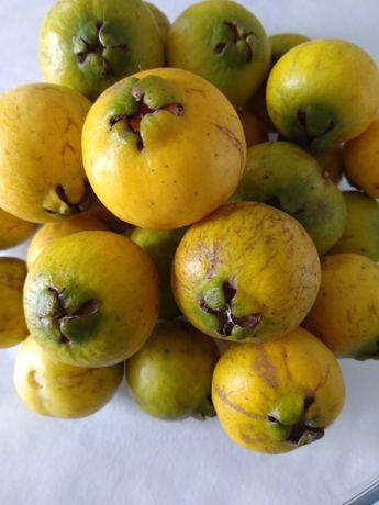 50 sementes de ARAÇÁ Amarelo / Ananás