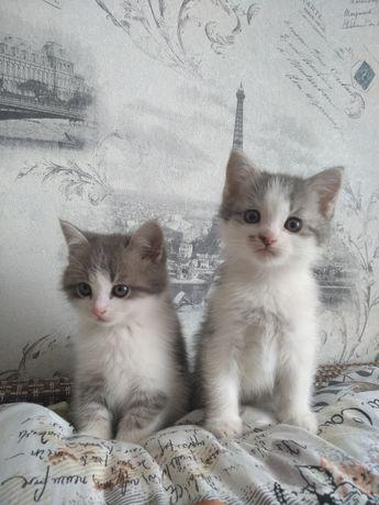 Віддам 2 прекрасних котиків