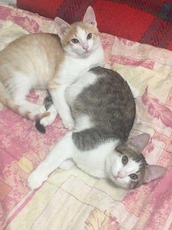 Котята в поиске любящей семьи!