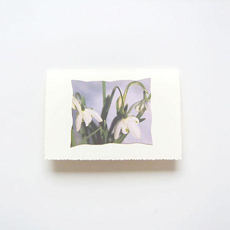 krokus kartka, kartka z krokusem, skromna kartka wiosenna, ładna kartk