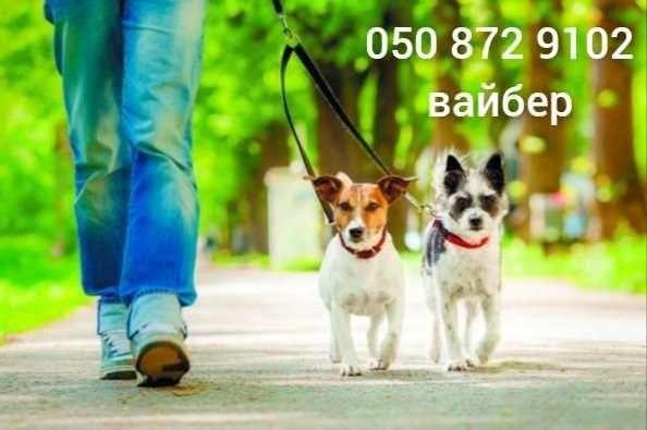 Выгул собак, передержка животных, центральный рынок