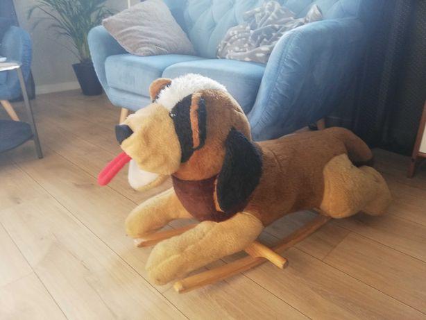 Duży pies na biegunach