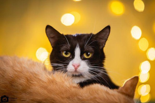 Отдам черно-белую кошку, стерилизована , 9 месяцев