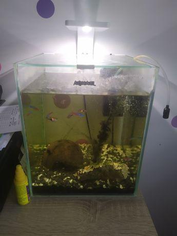 Akwarium Aquael 25x25x30