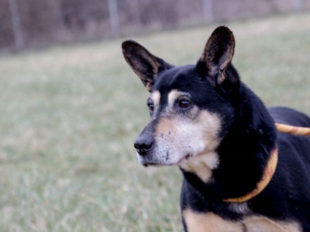Franek - towarzyski psiak, który potrzebuje ciepłego i spokojnego kąta
