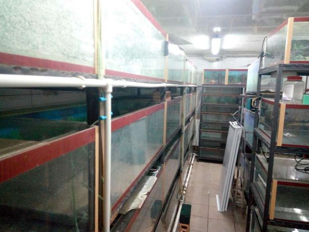 Продам акваріуми за ціною скла
